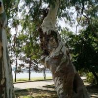 Вот такое дерево