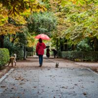 Осень. Мадрид