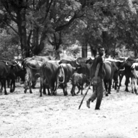 Босой пастух Анголы