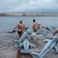 Невские моржи и дельфины