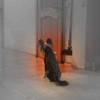 Собака у двери в коридор.