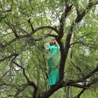 слияние с природой...девушка и дерево в зеленом...