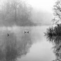 Утренний туман над прудом
