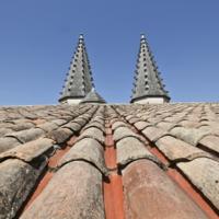 Грибы на крыше