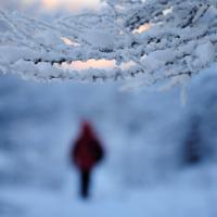 Проходя по зимнему парку