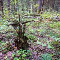 Крест в лесу
