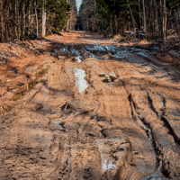 По грязюке через лес....