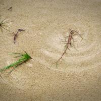 рисует ветер на песке