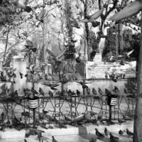 город и много голубей