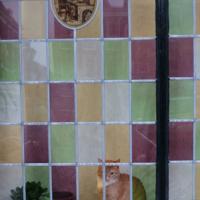 котик и растение в горшке за цветными стеклами