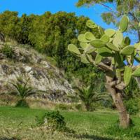 Кактус. Остров Родос