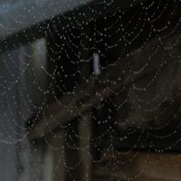 Капли на паутине