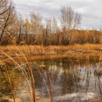 Осень на болотах