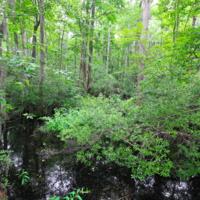 Великое мрачное болото, Вирджиния, США