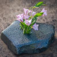 """""""И на камнях растут цветы""""."""