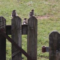 Забор на троих