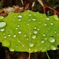 Бледно-зелёный лист осенний :)