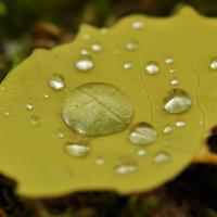 Жёлтый лист осенний :)