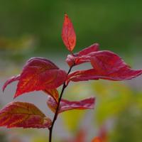 Октябрьские листья