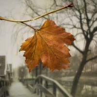 Осенний лист едва качался.......