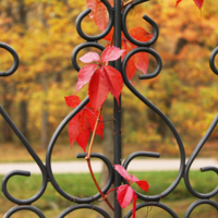 Осеннее оформление решетки.