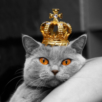 серый король