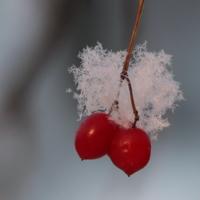 В самом начале зимы