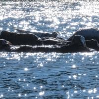 Солнечные: зайчики и нерпы