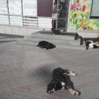 утомленные солнцем (4 собаки, 1 продавец)