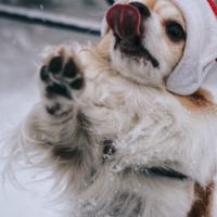 Новогоднее дай пять