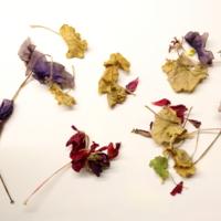 Сухие комнатные цветы