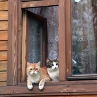 кошки на окошке