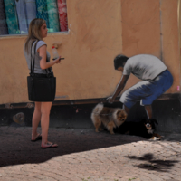 Дама с собачкой, собачка с кавалером