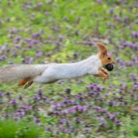 Полёт над цветочной поляной