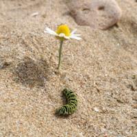Стать бабочкой (летать, а не ползать)