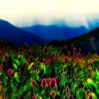 Малиновое цветение горного луга