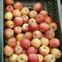 Яблочки 2021