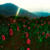 В траве Кавказа