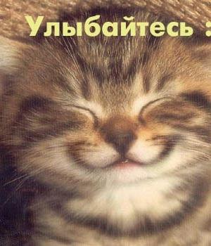 Кошка-Алёшка