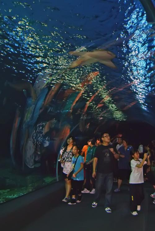 Бангкок. Океанариум.