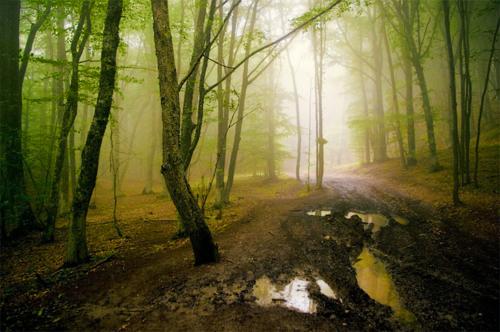 Из темного леса...