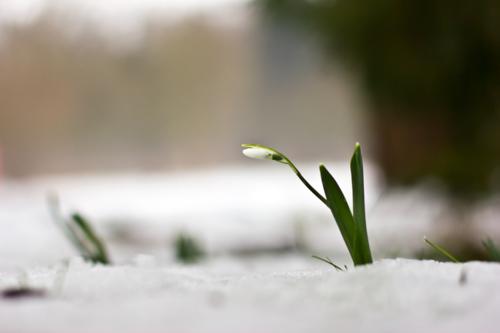 а я снега не боюсь...