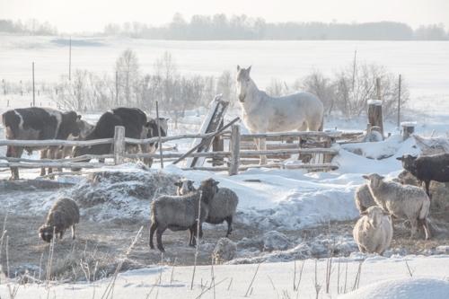 зимняя пастораль