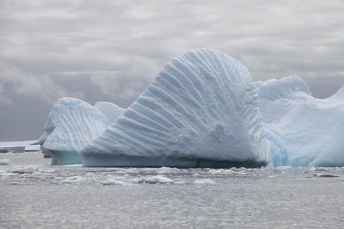 Страж Антарктиды
