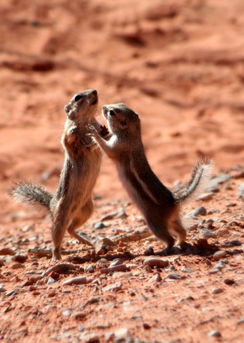 -- Потанцуем?