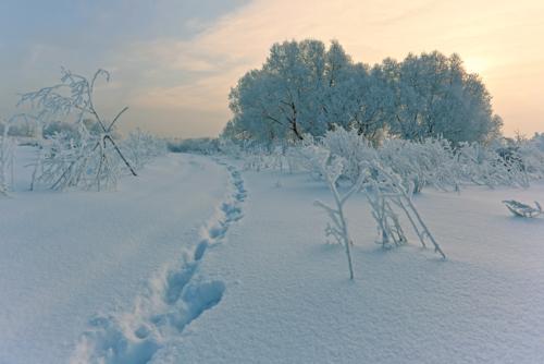 По снежной целине.