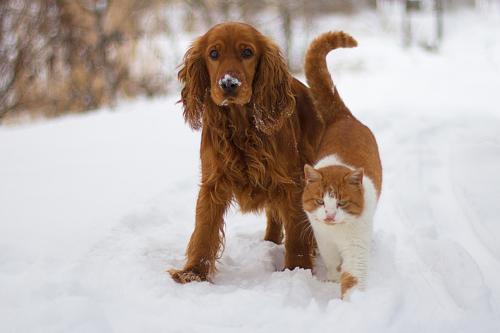 Незаменимые друзья