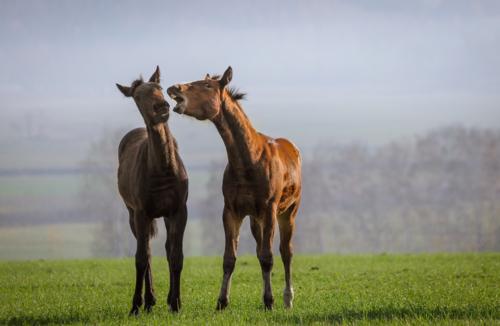 Конская любовь!