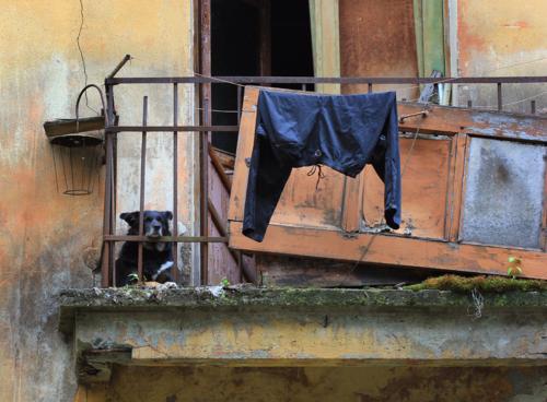 Страж балкона