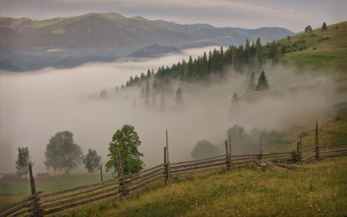 Ловушка для тумана